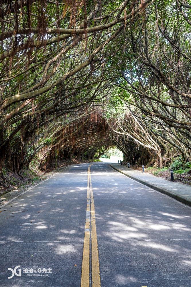 馬祖景點 馬祖西莒景點 有容路 榕樹隧道