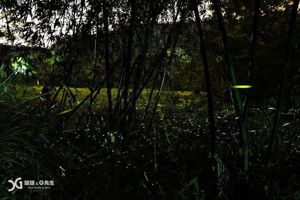 日月潭螢火蟲 螢火蟲拍攝 日月潭景點 螢火蟲秘境 蓮華池 南投螢火蟲