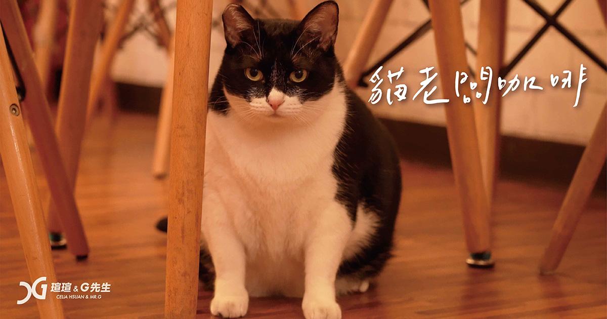台中寵物餐廳 台中寵物咖啡廳 台中貓咪餐廳 貓老闆咖啡