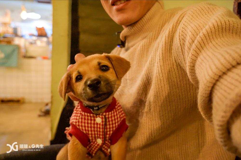 台中寵物餐廳 台中寵物咖啡廳 台中貓咪餐廳 台中狗狗寵物餐廳 浪浪別哭