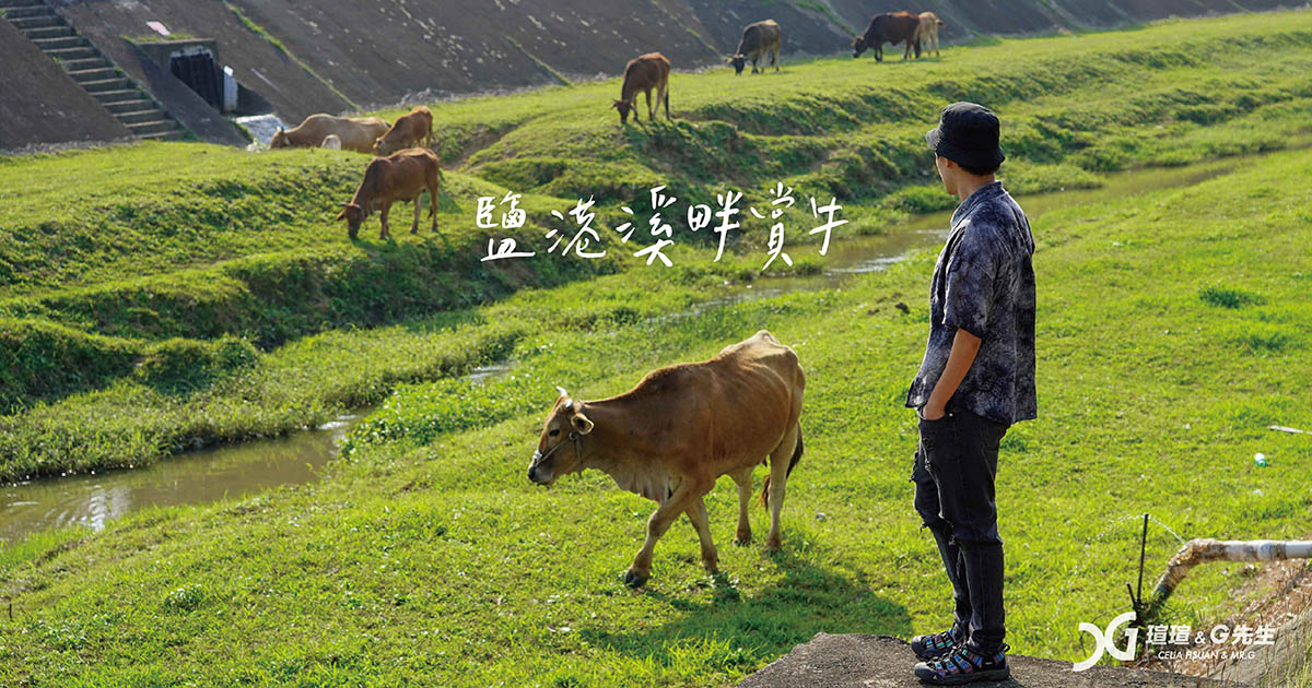 鹽港溪賞牛 新竹景點 新竹香山景點 17公里海岸線